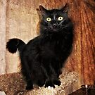 Yes I AM all Black, just ignore my three white toes.... by Jane Neill-Hancock
