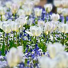 Favourite Floriade Garden by Alison Hill