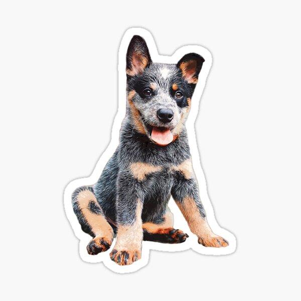 Australian Cattle Dog Blue Heeler Puppy Sticker