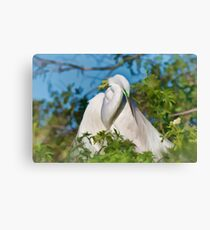Great Egret Maternal Moment Canvas Print