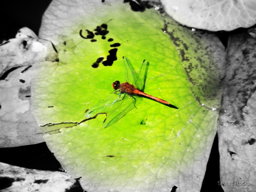 Dragonfly by Stuart Rocks