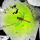 Dragonfly by Stuart Rocks