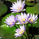 Lilac Spray by Stuart Rocks