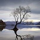 Wanaka Dreaming by Maxwell Campbell