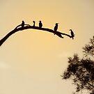 Sepia birds by Stuart Rocks