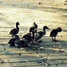 Sepia Ducklings by Stuart Rocks