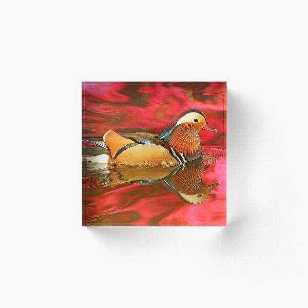 Mandarin Duck Reflections Acrylic Block