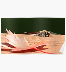 AUTUMN MEADOWHAWK Poster