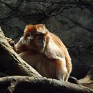 Ebony Langur, Bronx Zoo, Bronx New York by lenspiro