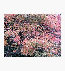 COLOURED TREE Photographic Print