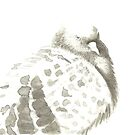 Pigeon by Goran Medjugorac