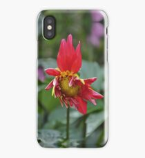 Dahlia Flowering iPhone Case/Skin