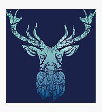 Morning Deer Photographic Print