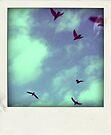 just fly by anastasia papadouli