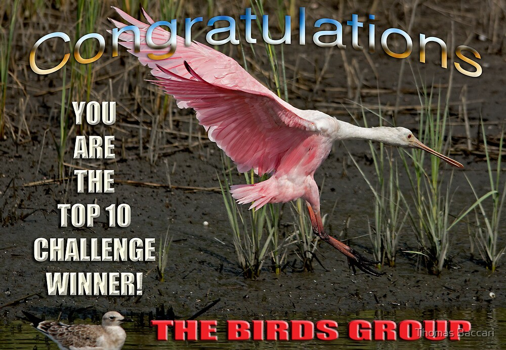 Top Ten Challenge Winner the Birds Group by TJ Baccari Photography