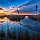 Reeds and Reflections by mhfore
