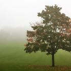 Early Autumn by Tim Waters