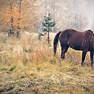 Autumn Graze by llequine