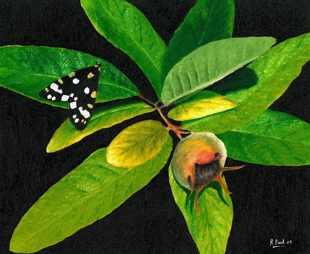 The Moth And The Medlar by Richard Paul