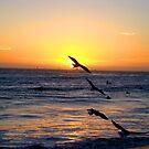 sunset 7 seagulls by Tim Horton