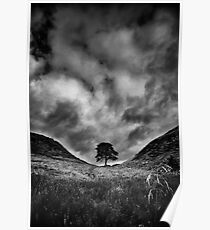 Along the Wall (Sycamore Gap) Poster