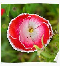 Decorative Poppy Poster