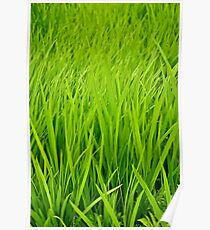 Waves of Green Poster