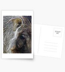 Warthog Postcards