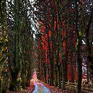 Autumn wood by Mark Walker