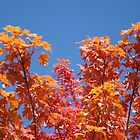 Blue Sky Sunny Red Orange Autumn Leaves art prints by BasleeArtPrints