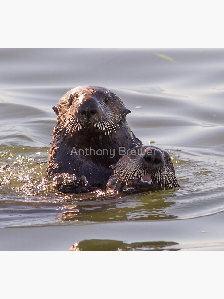 Sea otters of California by dailyanimals