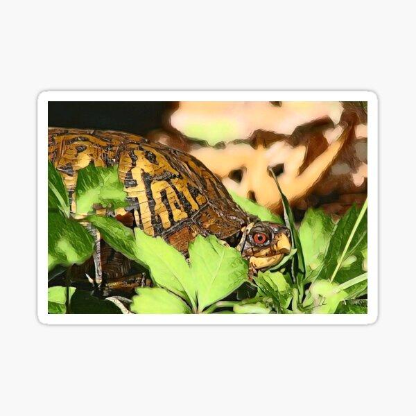 Eastern Box Turtle Sticker