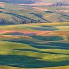 Farmland abstract by Linda Sparks
