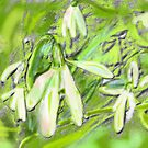 SNOWDROPS GRAPHIC ART AND PHOTO by Shoshonan