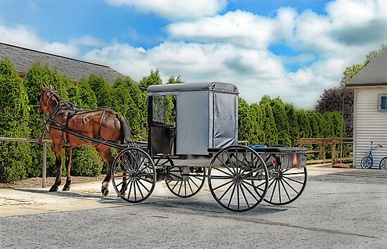 Horse & Buggy by Dyle Warren