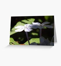 Sago petals Greeting Card
