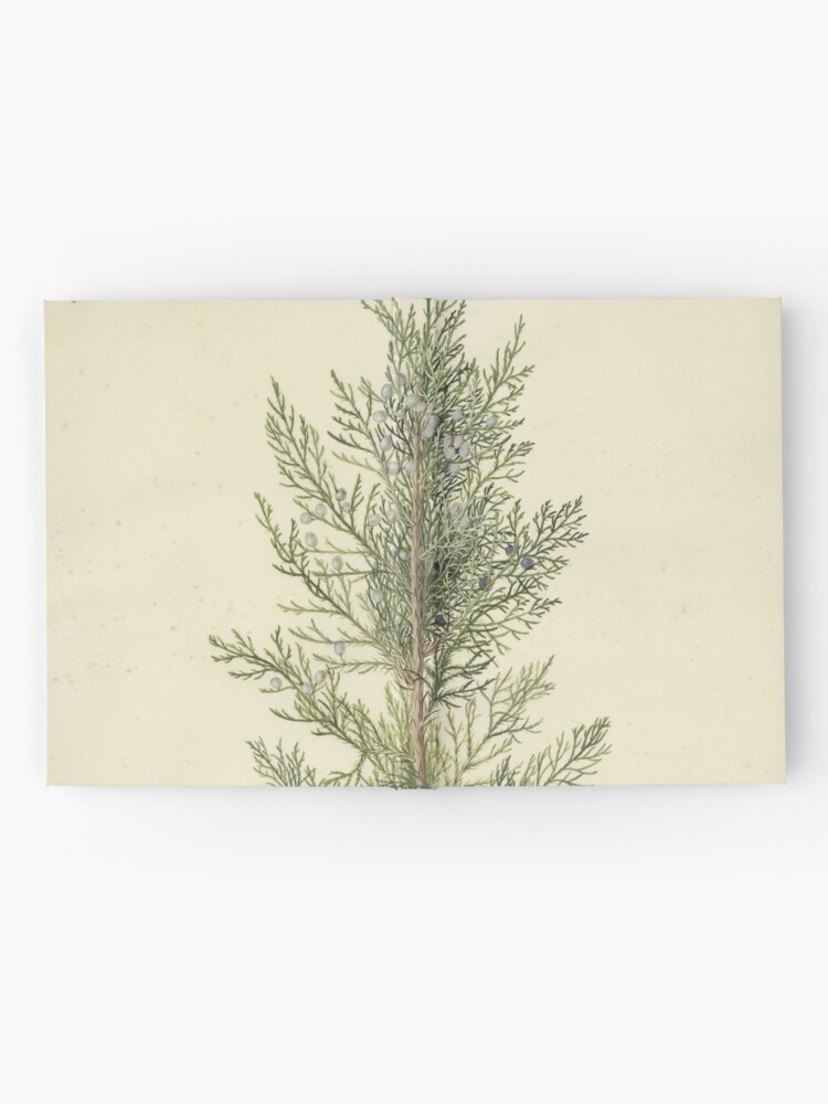 Alternate view of Botanical Juniper Hardcover Journal