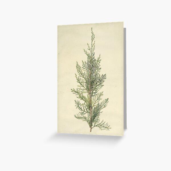 Botanical Juniper Greeting Card