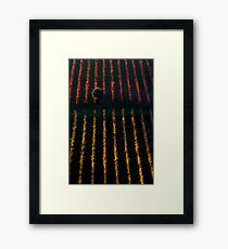 Autumn vineyard at sunset Framed Print