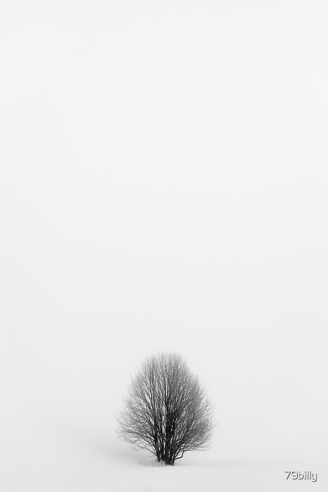 tree in white by 79billy
