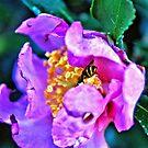 HDR Bee Flower by milerunner81