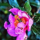 HDR Bee Flower 2 by milerunner81