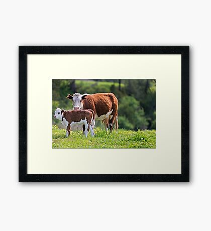 A Watchful Eye Framed Print