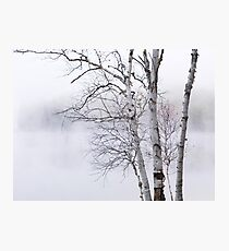 Birch trees over misty white lake nature scenery art photo print Photographic Print