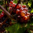 In The Shadows ~ Grapes ~ by Charles & Patricia   Harkins ~ Picture Oregon