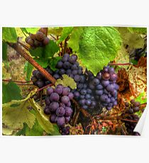 We Bunch Up ~ Grapes ~ Poster
