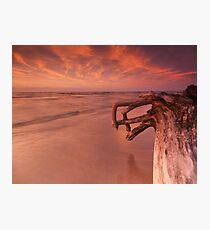 Dramatic sunset nature scenery of driftwood on a shore art photo print Photographic Print