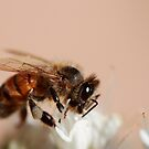 Busy Bee by Emjay01