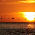 Flying Home At Sunset by Jo Nijenhuis