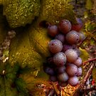 A Closer Look ~ Grapes ~ by Charles & Patricia   Harkins ~ Picture Oregon